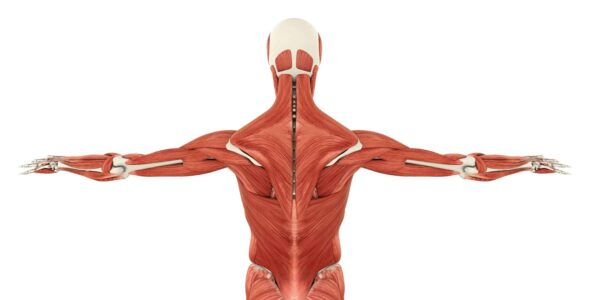 Know Everything about Back muscle pain