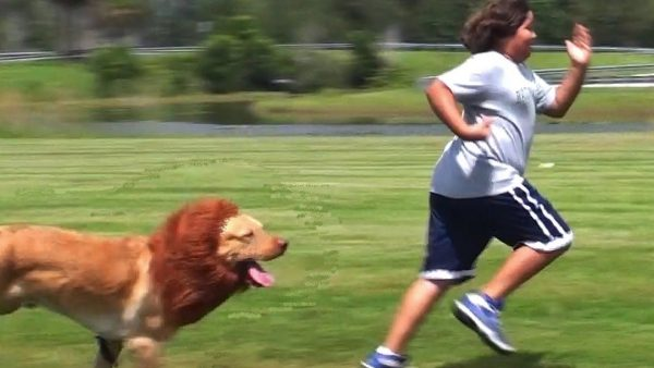 Try This Fun Dog Chase Game At Home Using A Pole Lure