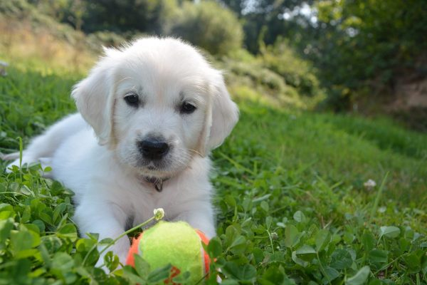 What Are The Most Popular Pet Supplies For Dog?